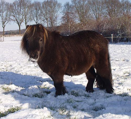 Pony camping Hendriks wijkje