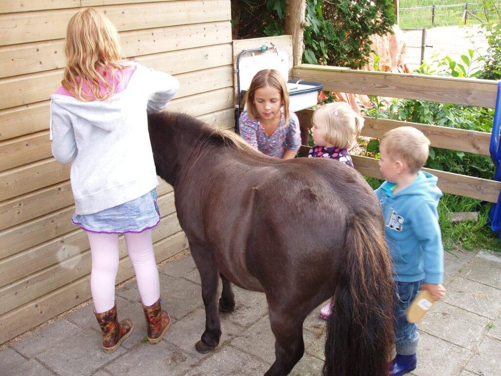 Tuttelen met de pony's