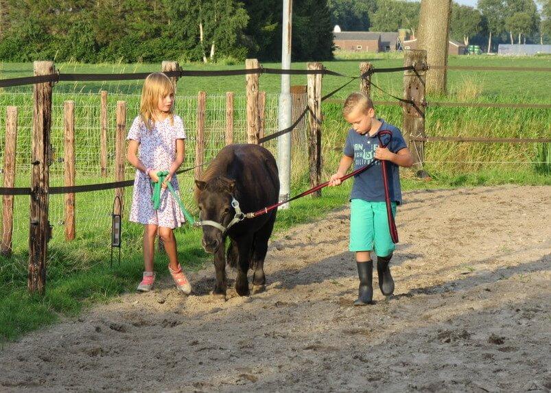 Wandelen met de pony's