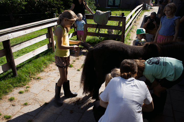 Pony's verzorgen vlakbij Slagharen